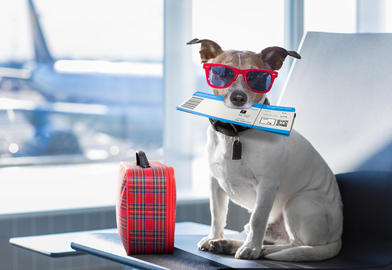 breve guida con indicazioni essenziali per chi intende trascorrere le proprie vacanze in Grecia, viaggiando in aereo con il proprio animale da compagnia...